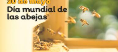 20 de mayo, día mundial de las abejas